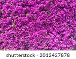 View Of A Wall Full Of Purple...