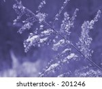 This is a purple toned background shot of some dried weeds and snow. - stock photo
