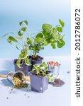 Spring Planting And Gardening...