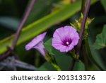 Purple Flower Sweet Potato Cro...