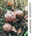 Beautiful Edible Mushrooms With ...