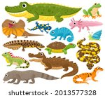 Reptiles And Amphibians....