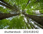 view up at the crowns of trees... | Shutterstock . vector #201418142