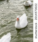 Small photo of A gaggle of white geese in a lake