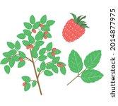 red raspberry bush. vector...   Shutterstock .eps vector #2014877975