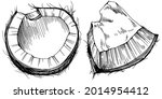 vector coconut hand drawn...   Shutterstock .eps vector #2014954412