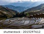 Rice Terraces In Yuan Yang  Yun ...