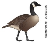 Canadian Wildlife graphics free vector Canadian Wildlife ...