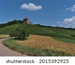 Narrow country road leading through golden barley fields with historic medieval castle Burg Wildeck in Baden-Württemberg, Germany, located on the top of a vineyard on sunny summer day with blue sky.