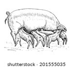 Pig With Piglets. Set Of Vector ...