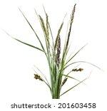 Bunch Of Mix Green Grass...