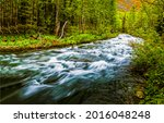 Fast River Flow In The Forest....