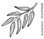 hand drawn simple olive branch... | Shutterstock .eps vector #2016993608