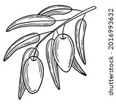hand drawn simple olive branch... | Shutterstock .eps vector #2016993632