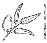 hand drawn simple olive branch... | Shutterstock .eps vector #2016993635