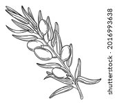 hand drawn simple olive branch... | Shutterstock .eps vector #2016993638