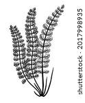 hand sketched fern botanical... | Shutterstock .eps vector #2017998935