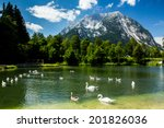 Group Of Birds In High Alps...