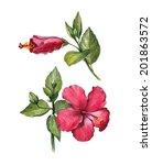 watercolor hibiscus flower... | Shutterstock . vector #201863572