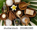 Green Palm Background  Spa...