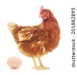 Isolated Brown Hen With Egg In...