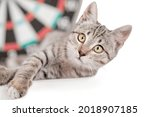 Cross Eyed Tabby Kitten Next To ...