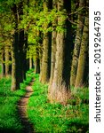 Small photo of a path trodden by people and animals leading to the forest. High quality photo