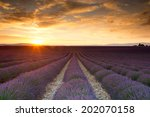 sunset over a summer lavender... | Shutterstock . vector #202070158