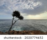 A Palm Tree On The Edge Top Of...