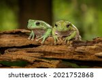 Cute Couple Green Forest Frog...