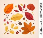 autumn leaves collection....   Shutterstock .eps vector #2022665018