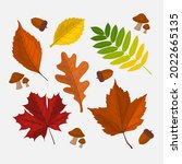 autumn leaves collection....   Shutterstock .eps vector #2022665135