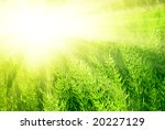 sunset and green spring grass | Shutterstock . vector #20227129