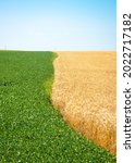 two color field with wheat and... | Shutterstock . vector #2022717182