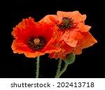 Red Poppy Flower Field