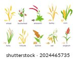 cartoon farm cereal crops and... | Shutterstock .eps vector #2024465735