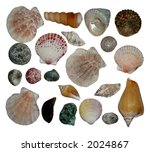 seashells   Shutterstock . vector #2024867