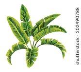 painting tropic palm banana... | Shutterstock .eps vector #202490788