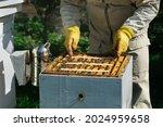 How to treat bees from varroa...