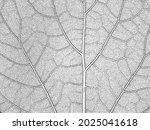 distressed overlay wooden leaf... | Shutterstock .eps vector #2025041618
