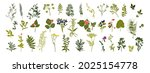 set of silhouettes of botanical ... | Shutterstock .eps vector #2025154778
