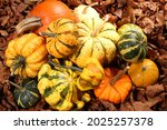 different squash in different...   Shutterstock . vector #2025257378