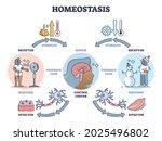 homeostasis as biological state ... | Shutterstock .eps vector #2025496802
