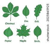 set of tree leaves birch ...   Shutterstock .eps vector #2025865925