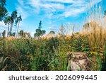 Summer Forest Nature Background....