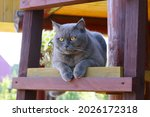 A Gray Cat Is Sitting On A...