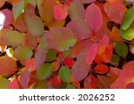 close up of autumn leaves | Shutterstock . vector #2026252