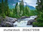 Mountain River In The Forest....