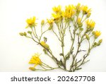 yellow  flowers on a white...   Shutterstock . vector #202627708