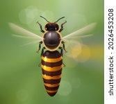 realistic bee queen mother in... | Shutterstock .eps vector #2026453208